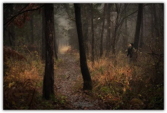 Iz gozda
