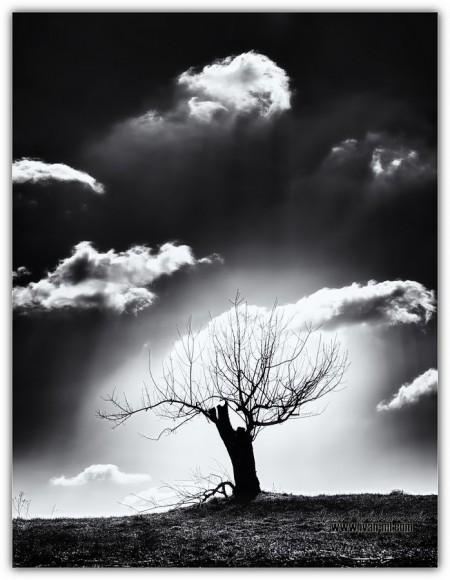 Pod milim nebom